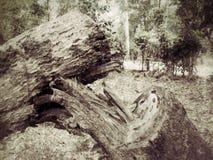 Het registreren van de besnoeiingsboom. royalty-vrije stock foto