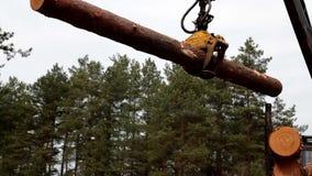 Het registreren van het pijnboomhout door forwarder in het bos stock footage