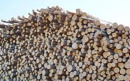 het registreren verzendend logboeken door spoorpijnboom registreert grondstoffen voor proces stock fotografie