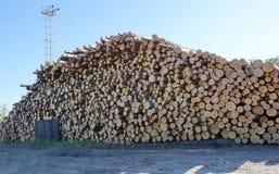 het registreren verzendend logboeken door spoorpijnboom registreert grondstoffen voor proces royalty-vrije stock fotografie