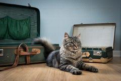 Het reizen met uw kat Stock Foto's