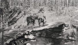 Het reizen op sleep opnieuw circa 1916 Royalty-vrije Stock Afbeeldingen