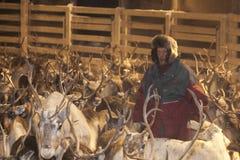 Het rendier die van Sami zich in Lapland, Finland verzamelen Stock Foto's