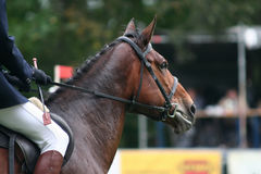 Het rennen paard Royalty-vrije Stock Afbeeldingen