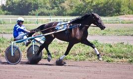 Het rennen paard Stock Afbeeldingen