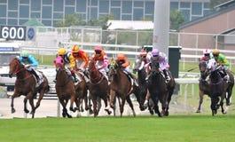 Het rennen paard Royalty-vrije Stock Foto