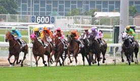 Het rennen paard in de Jockeyclub van Hongkong, Shatian-gebied Stock Afbeelding