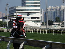 Het rennen paard in HKJC stock foto's
