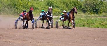 Het rennen paarden Royalty-vrije Stock Afbeeldingen