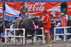 Het Rennen van buffels Stock Afbeeldingen
