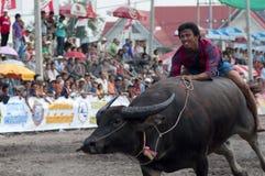 Het Rennen van buffels Stock Foto's