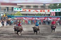 Het Rennen van buffels Royalty-vrije Stock Foto