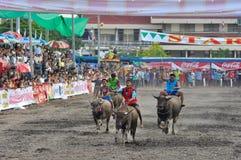 Het Rennen van buffels Royalty-vrije Stock Foto's