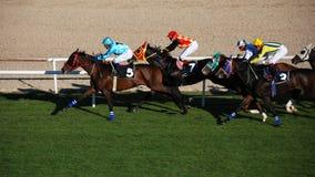 Het Rennen van Horce Royalty-vrije Stock Afbeelding