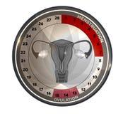 Het reproductieve systeem van de menstruele cycluskalender Stock Afbeelding