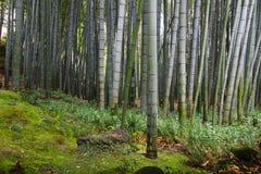 Het reuzebamboe groeien in het bos in Japan royalty-vrije stock afbeeldingen