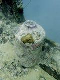 Het reuzekoraal encrusted kruik zit op schipbreuk in Vreedzame oceaan royalty-vrije stock fotografie