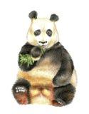 Het reuzepanda het kauwen bamboe Stock Fotografie