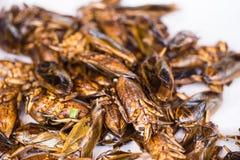 Het reuzewaterinsect braadde het Aziatische voedsel van de Insectsnack Stock Foto's