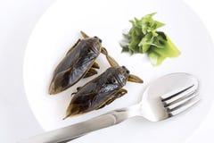 Het reuzewaterinsect is eetbaar insect voor het eten als voedselinsecten kokend gefrituurde knapperige snack op witte plaat, lepe royalty-vrije stock afbeeldingen