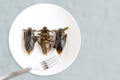Het reuzewaterinsect is eetbaar insect voor het eten als voedselinsecten kokend gefrituurde snack op witte plaat met vork op grij stock afbeelding