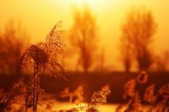 Het riet van de herfst Royalty-vrije Stock Foto's