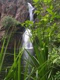 Het riet van het gras, Australië royalty-vrije stock afbeelding