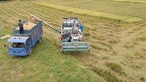 Het rijstlandbouwbedrijf bij het oogsten van seizoen door landbouwer met maaidorsers stock afbeelding