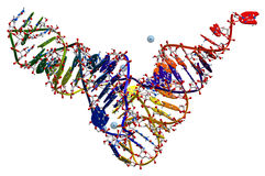 Het RNA van de overdracht van gist stock illustratie