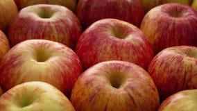 Het rode appelen roteren stock video
