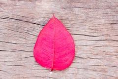Het rode blad op houten plaat kijkt mooi Hoogste mening Stock Foto