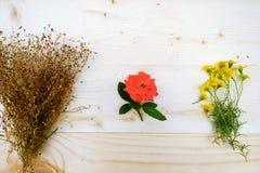 3 het Rode boeket van Gele Madeliefjes, nam, Baby` s Adem toe Stock Foto