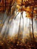 Het rode bos van de herfst Stock Fotografie