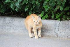 het rode dakloze katje met oor otodectic schurft in de oren bevond zich op eind met vrees op het asfalt in de binnenplaats van he royalty-vrije stock fotografie