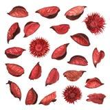 Het rode droge welriekend mengsel van gedroogde bloemen en kruiden van bloembladeren Royalty-vrije Stock Fotografie