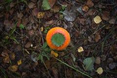 Het rode en oranje bospaddestoel groeien in gras, droogt bladeren en installaties met espblad Royalty-vrije Stock Foto's