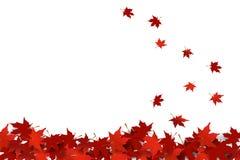 Het rode esdoornbladeren vallen vector illustratie