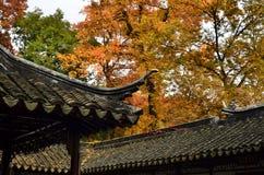 Het rode esdoornfestival van Tianpinghill in Suzhou, China stock afbeeldingen