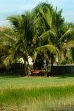 Het rode Hangmat hangen tussen 2 Palmen Royalty-vrije Stock Fotografie