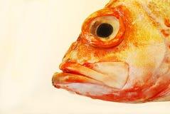 Het rode hoofd van Vissen Royalty-vrije Stock Foto's