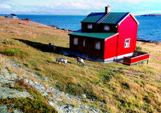 Het rode huis en deers Stock Afbeeldingen