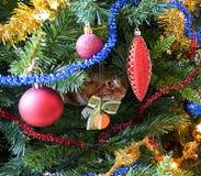 Het rode kat verbergen in takken van Kerstboom onder decoratie en ballen Selectieve nadruk royalty-vrije stock foto's