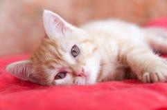 Het rode katje legt op een rood Royalty-vrije Stock Foto
