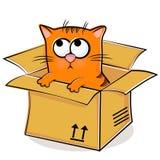 Het rode katje van Nice in doos Stock Foto's