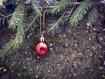 Het rode Kerstmisbal hangen op een nette tak stock afbeelding