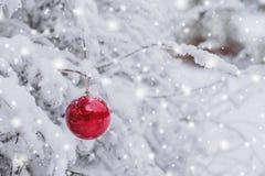 Het rode Kerstmisbal hangen op een sneeuwtak in de winter bos Vrolijke Kerstmis en het Gelukkige Nieuwjaar Royalty-vrije Stock Foto
