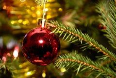 Het rode Kerstmisbal hangen op pijnboomtakje Stock Foto's