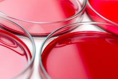 Het rode laboratorium petrischalen Royalty-vrije Stock Fotografie