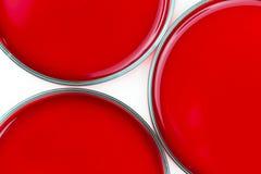 Het rode laboratorium petrischalen Royalty-vrije Stock Foto