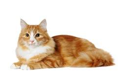 Het rode marmeren mengen-rassenkat liggen geïsoleerdt op wit Stock Afbeeldingen